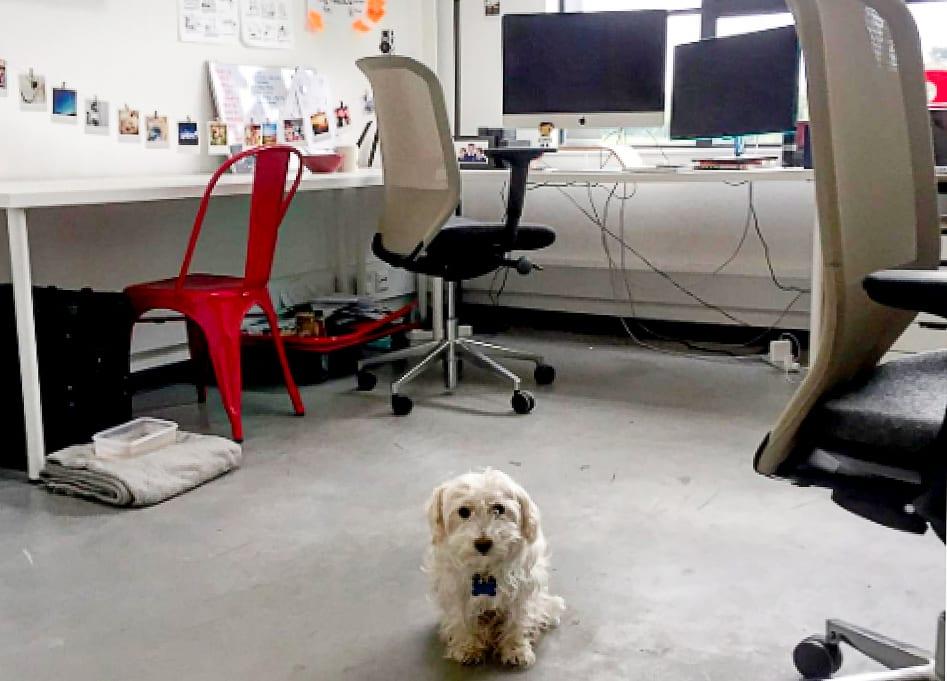 Working with Jooka We Are Jooka